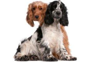 Hundekastration pro und contra