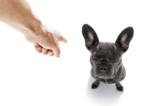 Erziehung beim Hund