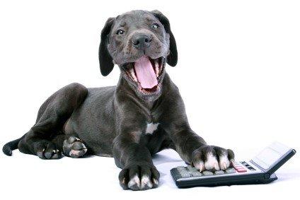 Kosten einer Kastration beim Hund
