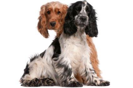 Pro und Contra Kastration beim Hund
