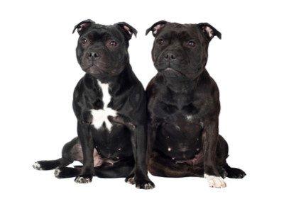 Hundekastrationspflicht