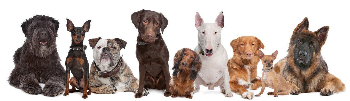 Hundekastrationsversicherung
